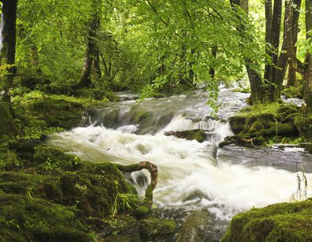 FLOODING: A Flooding Creek Rushes Wildly Through a Lush Forest Stock Photo