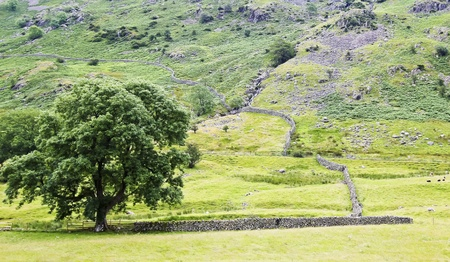 cumbria: A Rock Wall in Cumbria, Lake District National Park, England