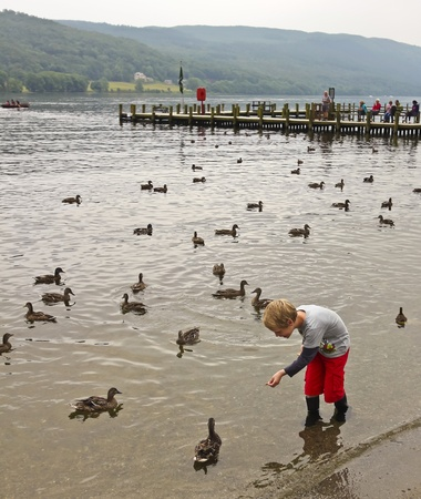 cumbria: Coniston, England - July 26: Coniston Water on July 26, 2012, in Coniston, Cumbria, England. Coniston Water is very popular with tourists for, among other things, feeding the ducks. Editorial