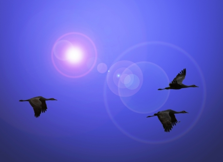 threesome: A Trio of Sandhill Cranes in Flight with Lens Flare Stock Photo