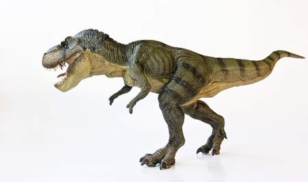A Tyrannosaurus Rex Hunts Against a White Background  Stock Photo