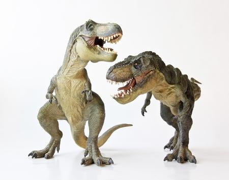 tiranosaurio rex: Un par Tyrannosaurus Rex se enfrentan contra un fondo blanco