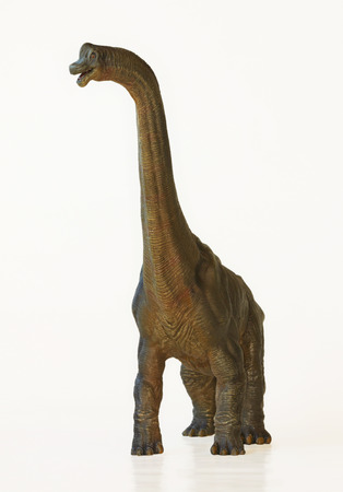 A Towering Brachiosaurus Dinosaur Whose Name Means Arm Lizard