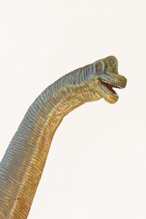 A Towering Brachiosaurus Dinosaur Whose Name Means Arm Lizard