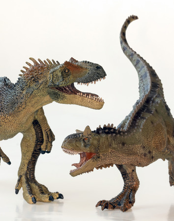 carnivore: A Battle Between Carnotaurus and Allosaurus Dinosaurs Against White  Stock Photo