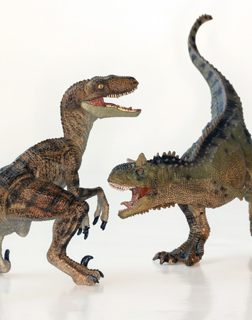 A Battle Between Carnotaurus and Velociraptor Dinosaurs Against White  Stock Photo