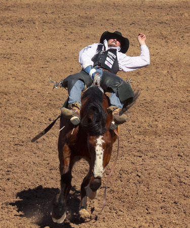 Tucson, Arizona - February 15: The La Fiesta De Los Vaqueros Rodeo on February 15, 2014, in Tucson, Arizona. Bareback rider Steven Dent aboard bronco Freefall in the 2014 Tucson Rodeo.