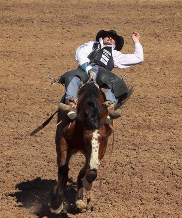 pima: Tucson, Arizona - February 15: The La Fiesta De Los Vaqueros Rodeo on February 15, 2014, in Tucson, Arizona. Bareback rider Steven Dent aboard bronco Freefall in the 2014 Tucson Rodeo.
