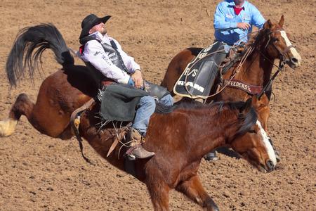 caida libre: Tucson, Arizona - 15 de febrero: El La Fiesta De Los Vaqueros Rodeo el 15 de febrero de 2014, en Tucson, Arizona. Jinete a pelo Steven Dent bordo bronco Freefall en el 2014 Tucson Rodeo.