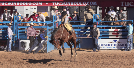 hardy: Tucson, Arizona - February 15: The La Fiesta De Los Vaqueros Rodeo on February 15, 2014, in Tucson, Arizona. Saddle Bronc rider Hardy Braden aboard bronco Tradition in the 2014 Tucson Rodeo.
