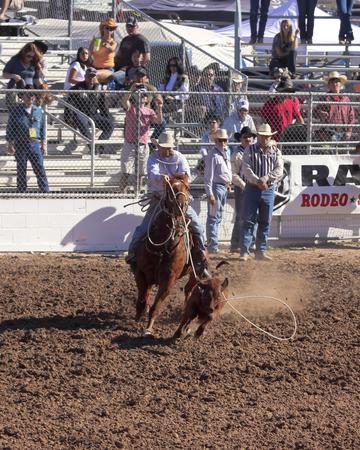 pima: Tucson, Arizona - February 15: The La Fiesta De Los Vaqueros Rodeo on February 15, 2014, in Tucson, Arizona. Tie-Down Roping event rider J.D. Kibbe in the 2014 Tucson Rodeo.