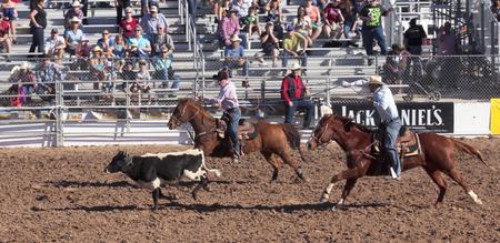 pima: Tucson, Arizona - February 15: The La Fiesta De Los Vaqueros Rodeo on February 15, 2014, in Tucson, Arizona. The Team Roping event in the 2014 Tucson Rodeo.  Editorial