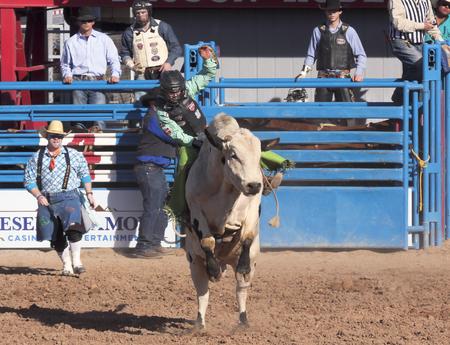 pima: Tucson, Arizona - February 15: The La Fiesta De Los Vaqueros Rodeo on February 15, 2014, in Tucson, Arizona. Bull Riding in the 2014 Tucson Rodeo.  Editorial