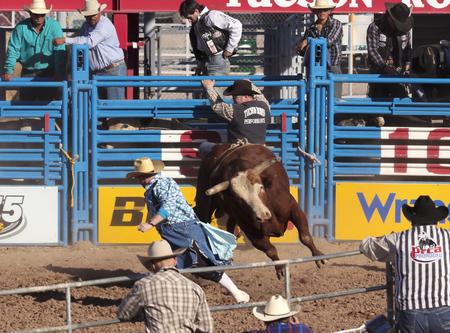pursued: Tucson, Arizona - February 15: The La Fiesta De Los Vaqueros Rodeo on February 15, 2014, in Tucson, Arizona. A Bull Riding clown is pursued Bull Dozer in the 2014 Tucson Rodeo.