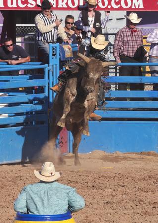 pima: Tucson, Arizona - February 15: The La Fiesta De Los Vaqueros Rodeo on February 15, 2014, in Tucson, Arizona. Bull Riding rider Tustin Daye aboard Danny Boy in the 2014 Tucson Rodeo.  Editorial