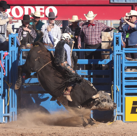 chandler: Tucson, Arizona - February 15: The La Fiesta De Los Vaqueros Rodeo on February 15, 2014, in Tucson, Arizona. Bull Riding rider Tye Chandler aboard Bellas Bucks in the 2014 Tucson Rodeo.