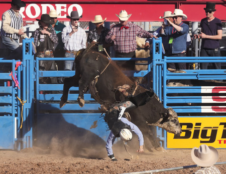 Tucson, Arizona - February 15: The La Fiesta De Los Vaqueros Rodeo on February 15, 2014, in Tucson, Arizona. Bull Riding rider Tye Chandler gets thrown by Bellas Bucks in the 2014 Tucson Rodeo.