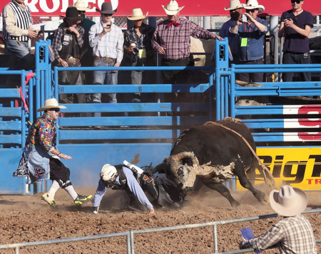 chandler: Tucson, Arizona - February 15: The La Fiesta De Los Vaqueros Rodeo on February 15, 2014, in Tucson, Arizona. Bull Riding rider Tye Chandler tries to escape Bellas Bucks in the 2014 Tucson Rodeo.