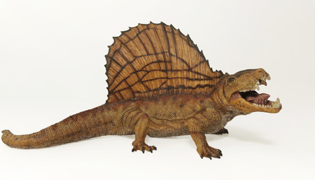 A Dimetrodon, a Predatory Mammal-like Reptile from the Permian