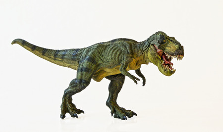 dinosaur animal: A Tyrannosaurus Rex Hunts Against a White Background  Stock Photo