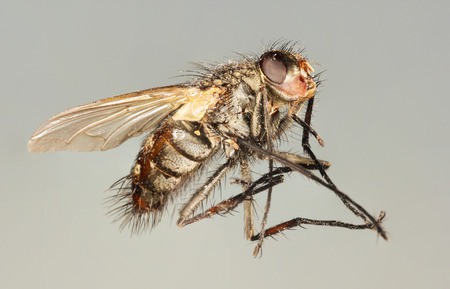 tabanidae: An Extreme Close Up Shot of a Horse Fly
