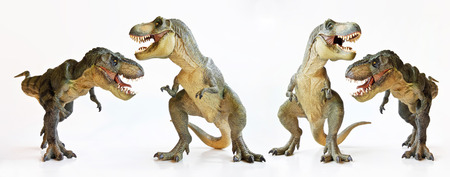 A Tyrannosaurus Rex Foursome Against a White Background