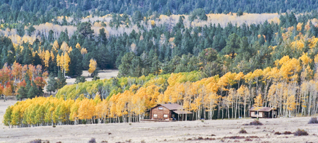 quaking aspen: A Pair of Mountain Cabins Nestled at the Edge of an Aspen Stand in the Fall
