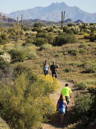 APACHE JUNCTION, ARIZONA - MARCH 15: Lost Dutchman State Park on March 15, 2015, near Apache Junction, Arizona. A Trail Leading into the Tonto National Forest and Superstition Mountain Wilderness in Lost Dutchman State Park, Arizona.