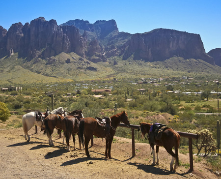 A Line of Horses Wait While Tethered at a Hitching Post with the Superstition Mountains in the Background