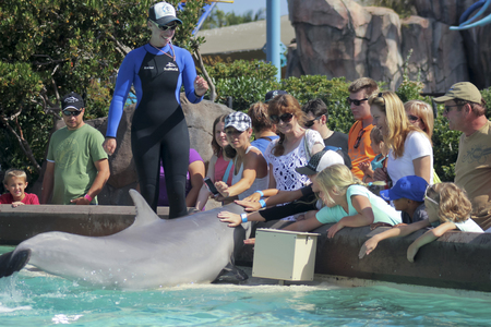 cetacean: SAN DIEGO, CALIFORNIA, JUNE 25. SeaWorld on June 25, 2015, in San Diego, California. A bottle-nosed dolphin entertains visitors at Dolphin Point at SeaWorld in San Diego in California.