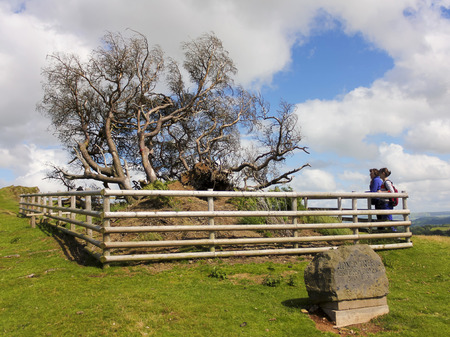 LLANFYLLIN, WALES, JULY 1. The Lonely Tree on July 1, 2016, near Llanfyllin, Wales. Two women pay their respects to the Lonely Tree, Wales tree of the year for 2014, after it blew down in a severe gale.