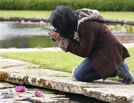 knelt: A Woman Kneels at a Ponds Edge to Photograph a Pink Water Lily