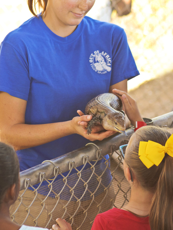 tourist feature: CAMP VERDE, ARIZONA - OCTOBER 13: The Out of Africa Wildlife Park on October 13, 2016, near Camp Verde, Arizona.  An Out of Africa Worker Shows Off a Red Tegu, Tupinambis rufescens, at the Out of Africa Wildlife Park near Camp Verde, Arizona. Editorial