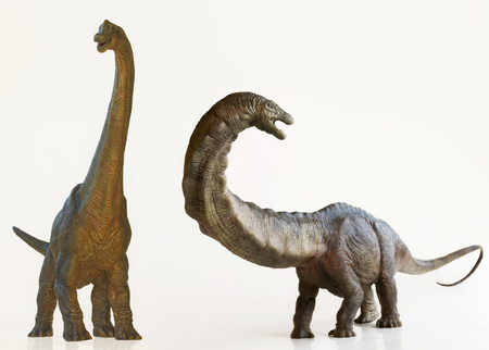 A Brachiosaurus Dinosaur Next to an Apatosaurus, Both Are Sauropods Stock Photo - 72060768