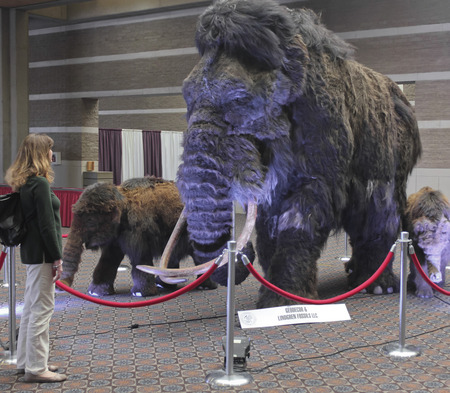 lapidary: TUCSON, ARIZONA, FEBRUARY 12. The Tucson Convention Center on February 12, 2017, in Tucson, Arizona. A Woman Gazes at a Woolly Mammoth Family at the Tucson Gem and Mineral Show in Tucson, Arizona. Editorial