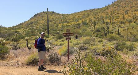 cholla: A Man Hikes the Go John Trail, Cave Creek Regional Park, Cave Creek, Arizona