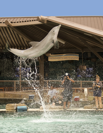 SCOTTSDALE, ARIZONA, MAY 14. Dolphinaris on May 14, 2017, in Scottsdale, Arizona.  A Bottlenosed Dolphin Breaches for Photographers at Dolphinaris in Scottsdale, Arizona. Editorial