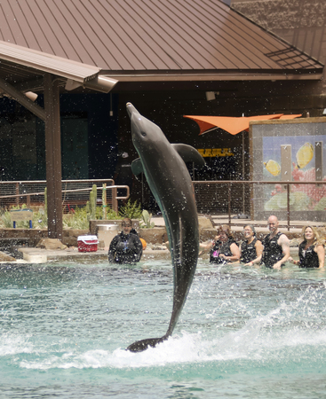 cetacean: SCOTTSDALE, ARIZONA, MAY 14. Dolphinaris on May 14, 2017, in Scottsdale, Arizona.  A Bottlenosed Dolphin Breaches for Visitors at Dolphinaris in Scottsdale, Arizona.