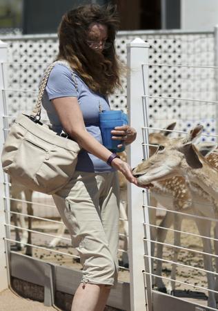 stingrays: PICACHO, ARIZONA, MAY 21. Rooster Cogburn Ostrich Ranch on May 21, 2017, near Picacho, Arizona. A Woman Feeds Fallow Deer, Rooster Cogburn Ostrich Ranch near Picacho, Arizona.