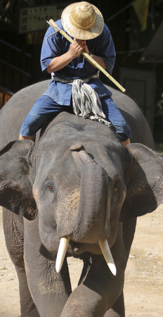 A Rider Prays Atop an Asian Elephant in Chiang Mai, Thailand