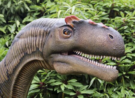 CHESTER, ENGLAND, JUNE 18. Chester Zoo on June 18, 2019, in Chester, England. A Close Up Portrait of an Allosaurus Dinosaur, Chester Zoo, Cheshire, England, Great Britain, United Kingdom