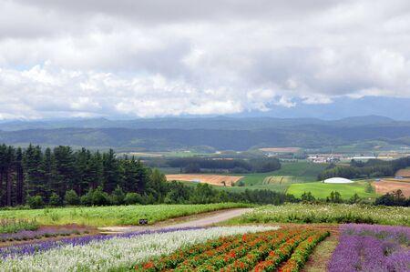 フィールドの風景花いっぱいの