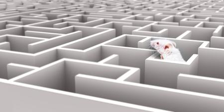 Witte Muis in Wit doolhof kijken over muren