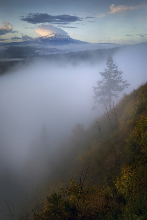 mount hood national forest: Mt Hood and misty tree in the Columbia River Gorge