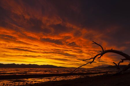 reno: Vivid sunrise at Pyramid Lake, Nevada with dead tree limb.