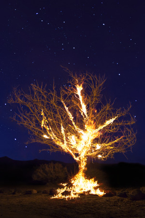 Burning Tree on fire at night with stars