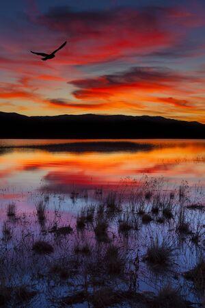 lake sunset: Swan Lake, Nevada. Sunset shot with bird in colorful sky.