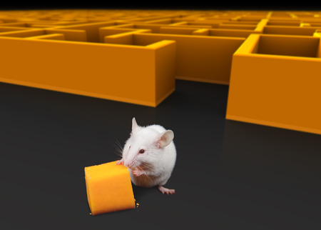 White mouse at exit of maze with Cheese. Stockfoto
