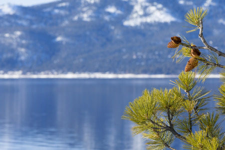 Lake Tahoe in Winter with Pine tree and Pine cone as border on right side of background image.  Shallow depth of field with focus on Pine Cones and Tree.