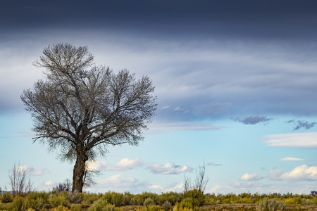 Single tree in the desert with cloudy blue sky.  Shallow depth of field with focus on tree.